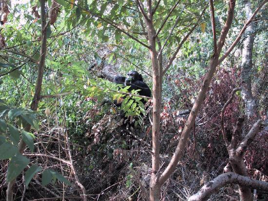 Gombe Stream National Park: Chimp by the beach