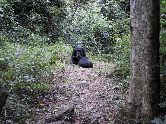 Gombe Stream National Park: Mom and juvenile