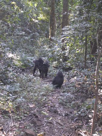Gombe Stream National Park: Family love!