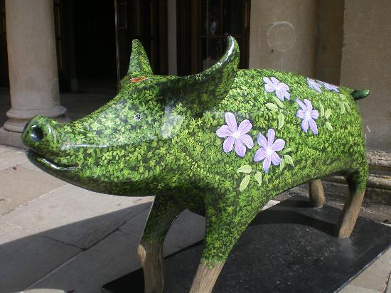 YHA Bath: Bath pig