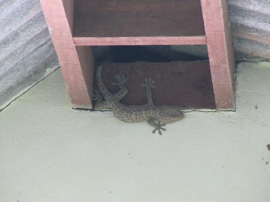 Rock Inn Bailan: Gecko (Hahnersatz)