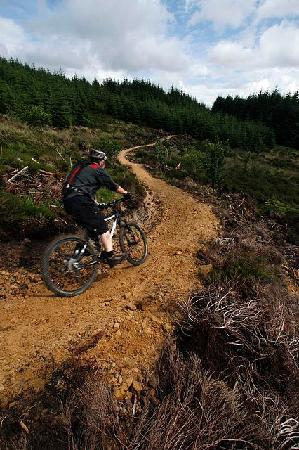 Purple Mountain Bike Hire Centre: Single Track