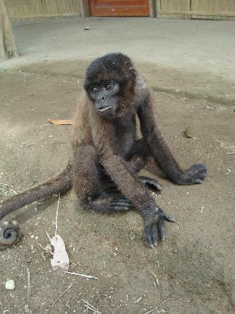 Museo Kamak Maki: Franco, the monkey