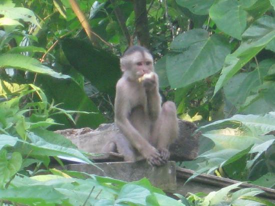 Museo Kamak Maki: Lucas, our monkey