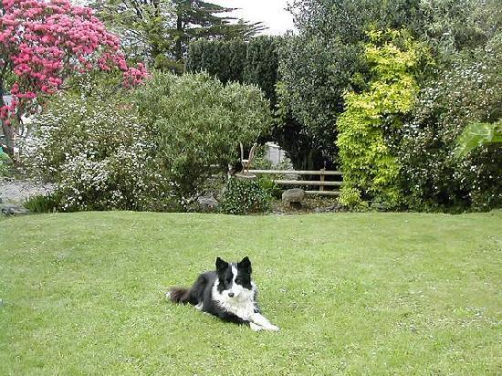 Pen Y Garth: Garden