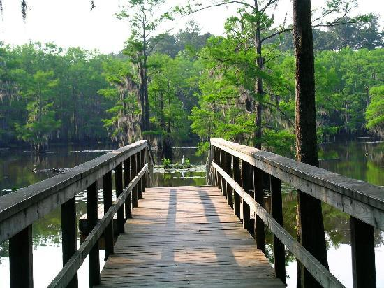 Caddo Lake State Park - Picture of Caddo Lake State Park ...