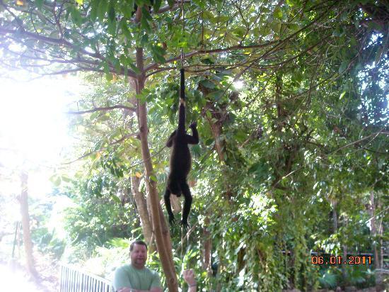 Hotel Riu Yucatan: Monkeys