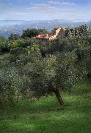 B&B Il Giardino di Jonah: Sarete in mezzo agli olivi