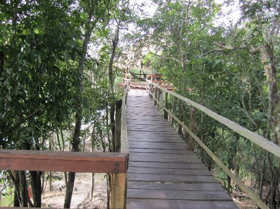 Juma Amazon Lodge : stilted walkways connecting different parts of the lodge