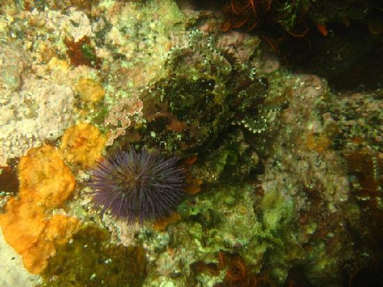 Pisces Divers: Lots of sealife underwater