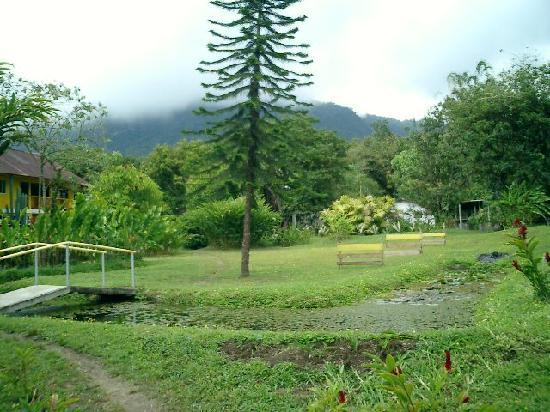 Hacienda San Vicente: Area around the tilapia pond