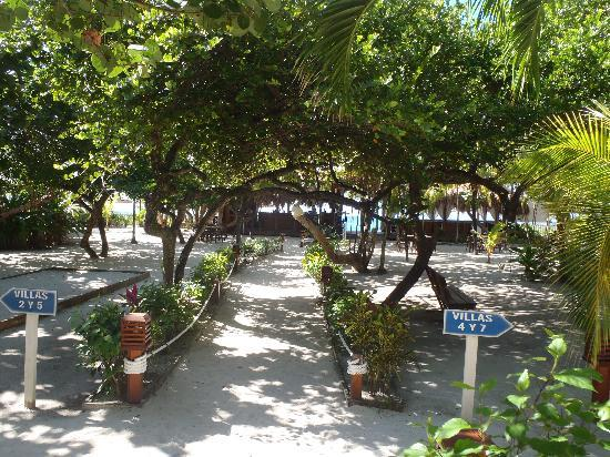 Paradise Beach Hotel: the beautiful walkway from the restaurant to the beach bar