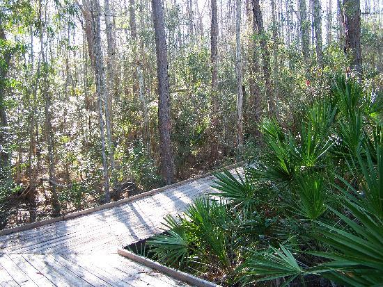 Calusa Nature Center and Planetarium : Boardwalk