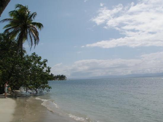 Hotel Lula's Bed and Breakfast: Beach at Bocas del Drago
