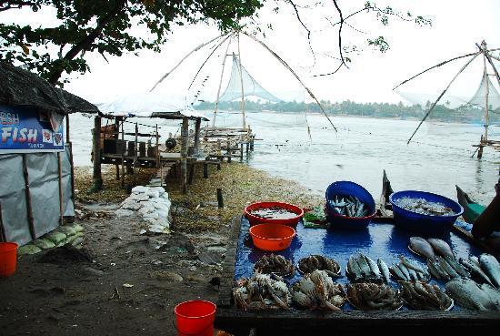 Kochi (Cochin), Indien: Kochi, Fischnetze am Hafen