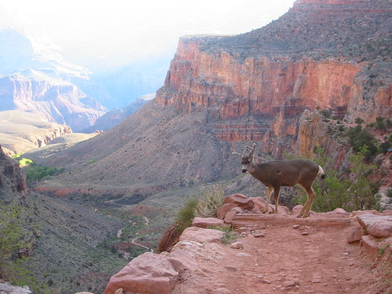 Marvelous Marv's Grand Canyon Tour