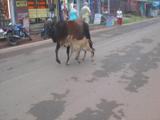 Aldeia Santa Rita: street cows
