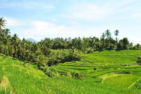 Bali By Quad Foto