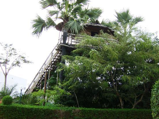 Tuticorin, India: Tree house