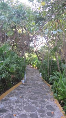 Hotel Dos Playas Beach House: The lush grounds.