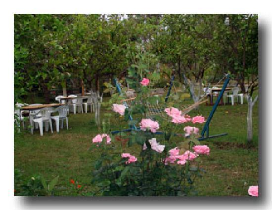 Kiyi Pansiyon: garden