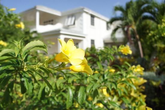 Shades Holiday Apartments: Lush tropical garden