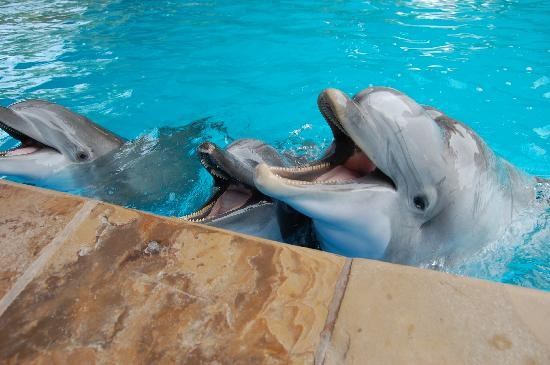 Feeding The Dolphins Picture Of Seaworld San Antonio