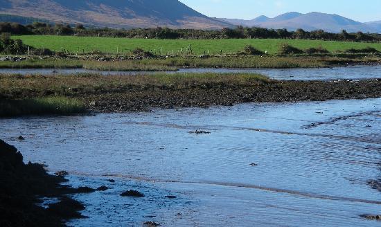 Ard Na Coille Bed and Breakfast: La mer est juste à quelques kilomètres à pied du B&B ! Une jolie balade à ne pas manquer.
