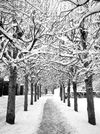 Saint Die des Vosges, France: Une allée du parc