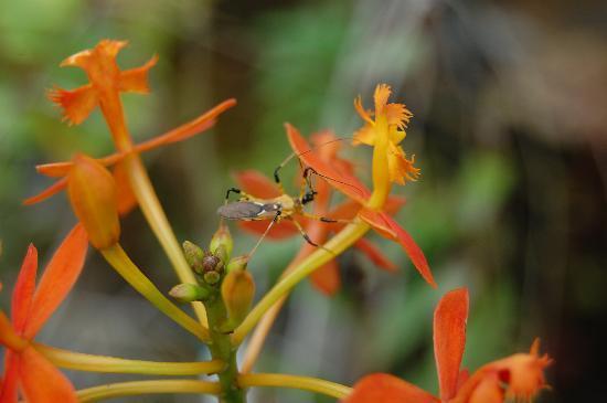 Kipandi Butterfly Farm: camoflaged beetle