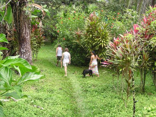 tropischer Garten von Cabinas Algebra