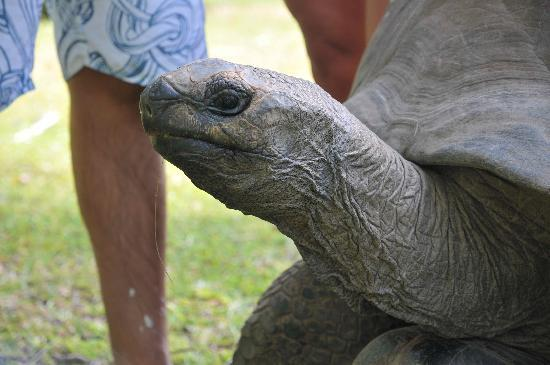 Le Chateau de Feuilles: Clara la tortue géante