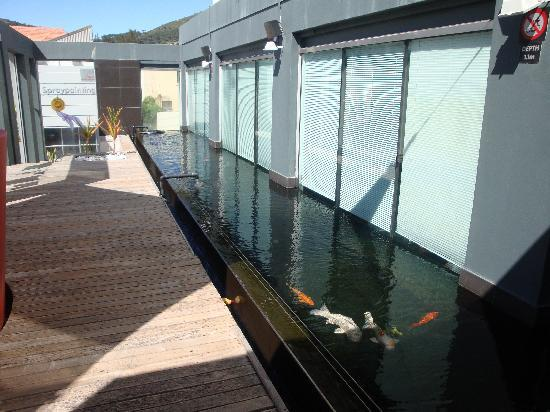 Protea Hotel Fire & Ice Cape Town: decking with fish tank