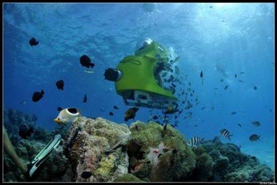 Image Result For Affordable Bora Bora Honeymoon