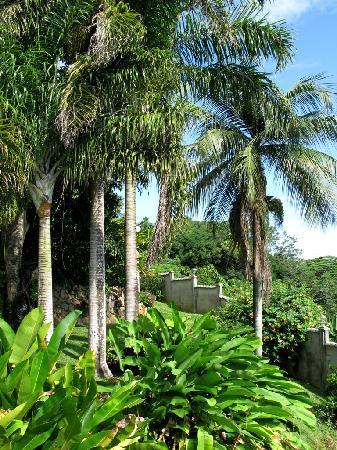 Anse Soleil Resort: Giardino della struttura