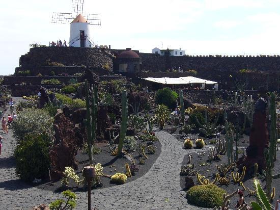 Jardín de Cactus: Vista sul giardino