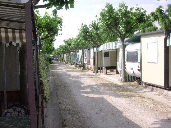 Girasole Camping Village: ALTRO VIALE