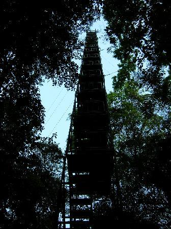 Réserve nationale de Tambopata, Pérou : Observation Tower