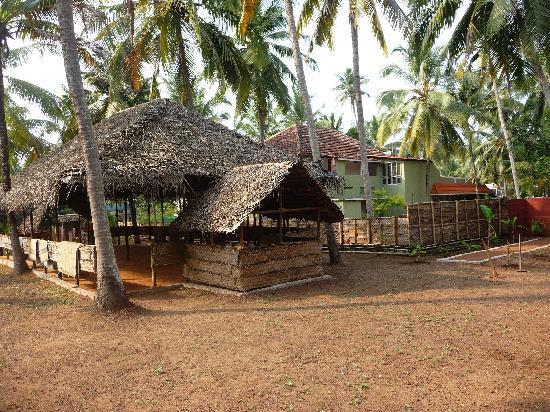 Sharanagati Yogahaus: asana hall