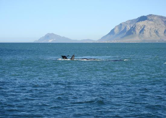 La Fontaine Guest House: Whale watching