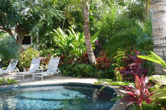 Pineapple Inn : pool