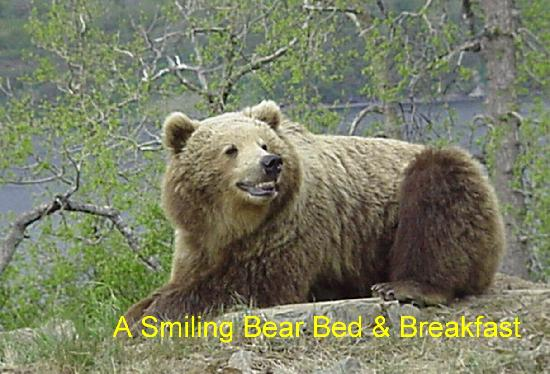 A Smiling Bear B&B: A Smiling Bear