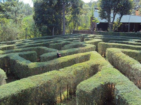 2.-Misiones- Montecarlo: Parque Juan Vorstich laberinto vegetal: fotografía de Provincia de