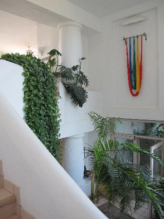 Casa Contenta Bed & Breakfast: Cascading greenery in the entrance