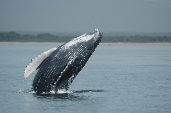 Ocean Friendly Whale Watching Tours: Up close and personal!!!!