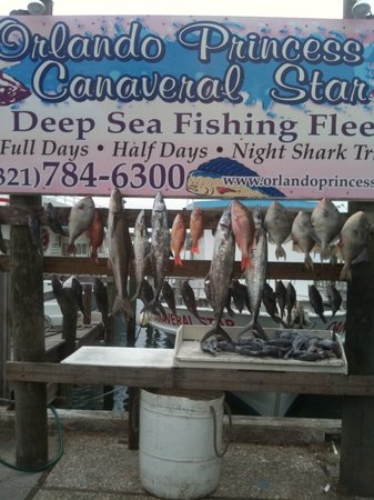Orlando Princess & Canaveral Princess Deep Sea Fishing