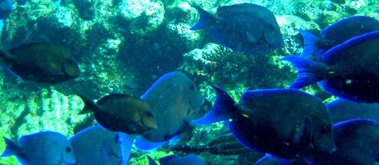 Brendal's Dive Center: The reef near Green Turtle Cay, 8 Dec 2010