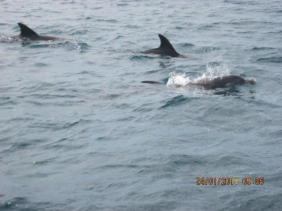 Bamburi, Quênia: balade avec les dauphins