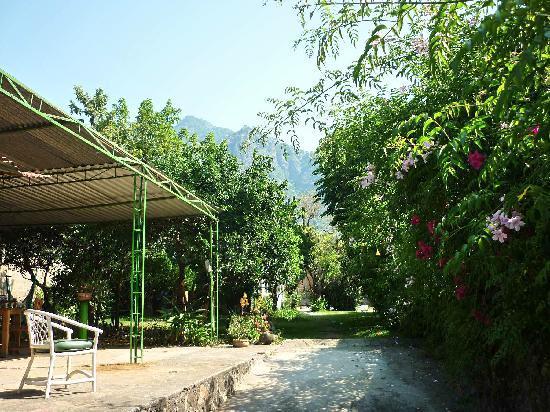 Posada La Palma: giardino La Palma