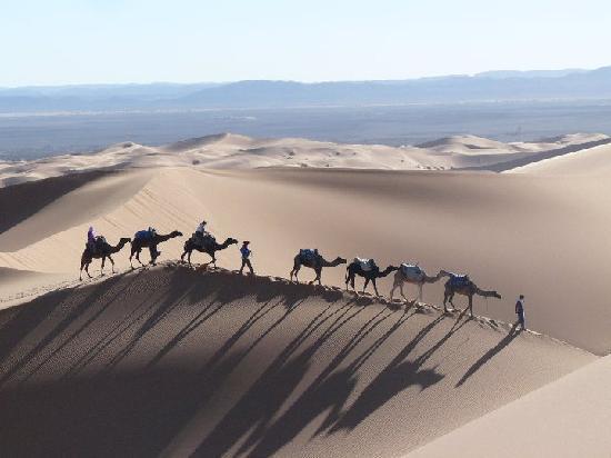 Auberge Takojt: Oasis excursions – Randonnes en chameau dans le Sahara Désert